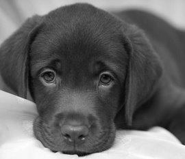 un cane, non troppo feroce
